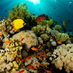 coral_reef_hd_widescreen_wallpapers_1920x1200